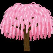 tree_sakura_shidarezakura.png